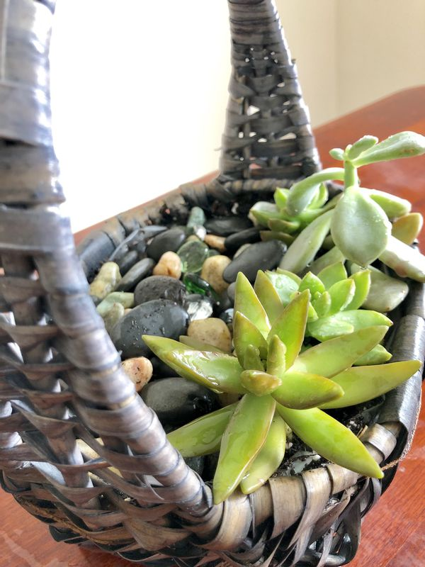 Succulent Garden Basket - Silver Spring (Pick Up Only)