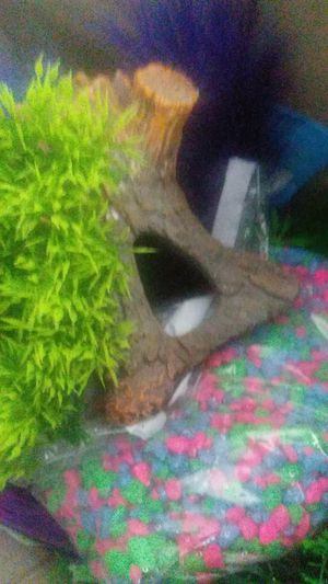 Fish tank plants and ects for Sale in Moreno Valley, CA