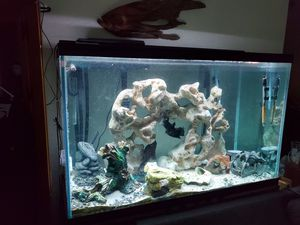 150gal tank and 55gal terrarium need gone asap for Sale in Casselberry, FL