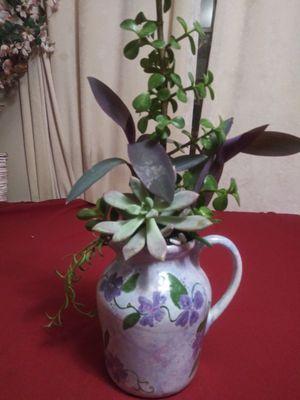 Succulents en jarrón de cerámica chica for Sale in Bell, CA