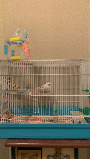White and blue black spotted parakeet and cage for Sale in Prosper, TX