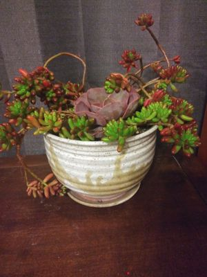 Succulents in pot for Sale in Sacramento, CA