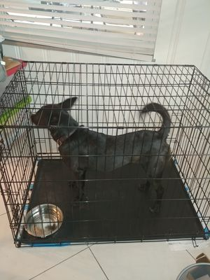 Dog Crate with divider: 42 x 28 x 30 for Sale in Tampa, FL
