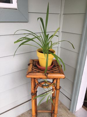 Indoor home spider plant for Sale in Mukilteo, WA