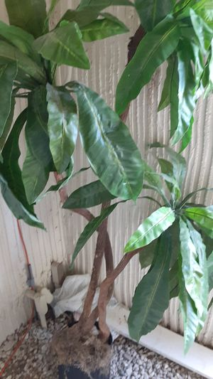 Beatiful. Silk tree for decoration house or office 80 tall real price $189,00 home goods big for apart now for Sale in Boca Raton, FL