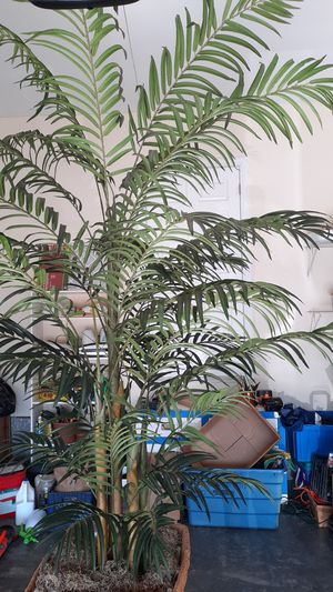 Artificial 10' Palm tree with 5 plants per pot including large custom basket. Leaf spread is approximately 5 to 6'. Hard to find! for Sale in Cleveland, TN