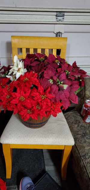 Whole bunch Poinsettias for Sale in Kent, WA