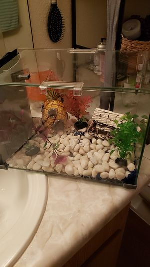 Glass fish tank for Sale in Phoenix, AZ