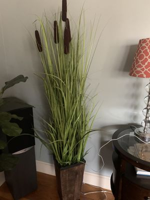 Artificial Grass Plant for Sale in Seekonk, MA