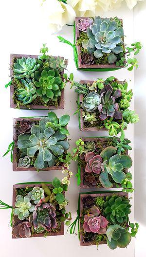 Succulent Arrangement for Sale in Virginia Beach, VA