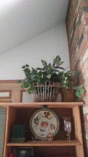 Fake plants decor for Sale in North Richland Hills, TX