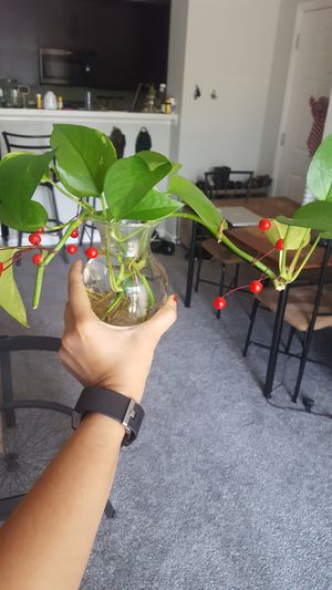 Water plant for Sale in Waukegan, IL