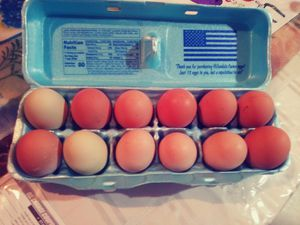 Fresh chicken eggs for Sale in Brick Township, NJ