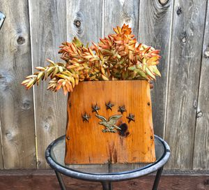 Succulent Planter for Sale in San Diego, CA
