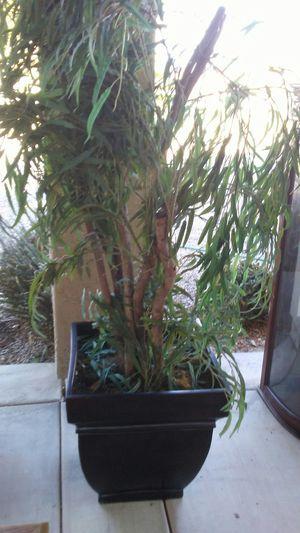 Plastic plant $10 for Sale in Chandler, AZ