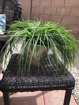 Fake plant! for Sale in Chandler, AZ