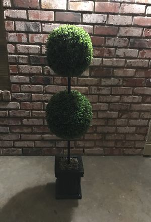 ITS 2 TOPIARY TREES for Sale in San Antonio, TX