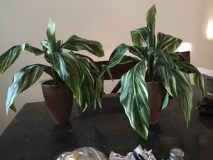 Fake plant for home decoration 2 sat for Sale in Richmond, VA