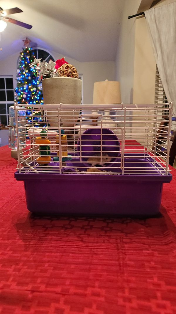 2 Hamsters and cage