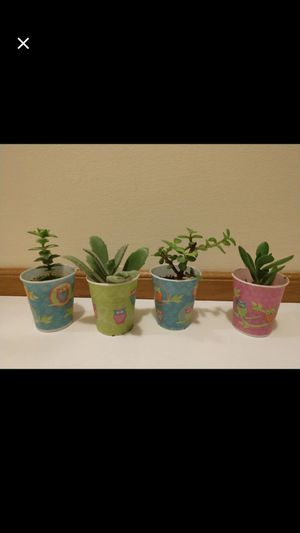 4 different succulents for Sale in Sylva, NC