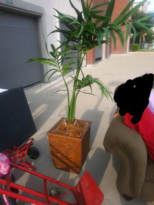Fake plant for Sale in Plano, TX