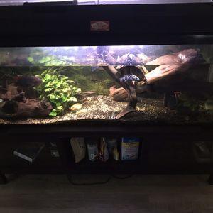 55 Gallon Fish tank Complete Setup for Sale in Auburn, WA