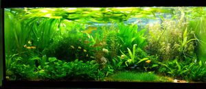 Live aquarium plants (natural fish tank decor and filter) for Sale in Virginia Beach, VA