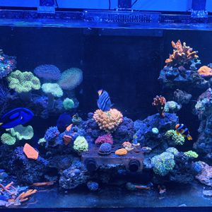 Corals And Fish For Sale for Sale in Murrieta, CA