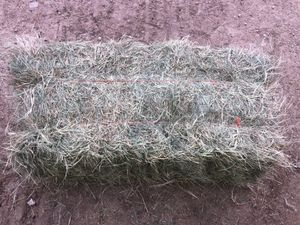 Coastal square bales for Sale in College Station, TX