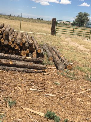 6 foot latías for sale call me if you are interested for Sale in Estancia, NM