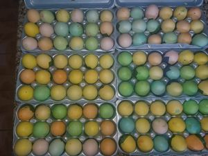 Easter Confetti Eggs for Sale in Houston, TX