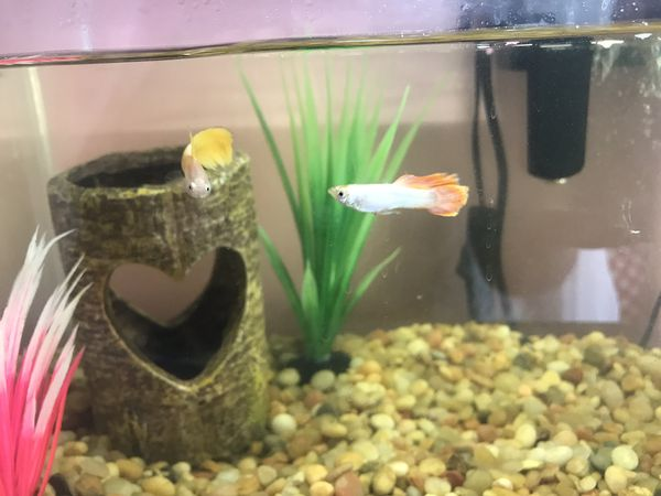 Fish tank/ pump/ heater accessories and fish
