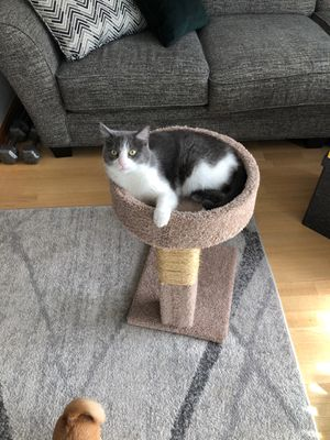 Cat tower for Sale in Portland, OR