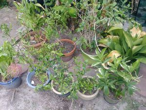 9 plants including pots for Sale in Houston, TX
