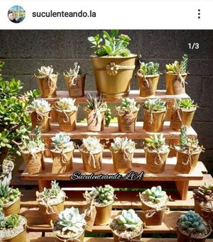 Succulents party favors for all occasions for Sale in Montebello, CA