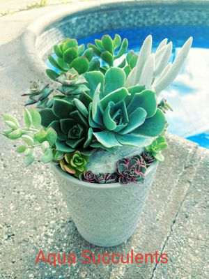 Succulent Arrangement in a Gray vase for Sale in City of Industry, CA
