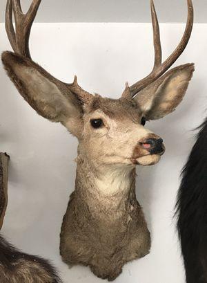 Deer taxidermy for Sale in El Mirage, CA