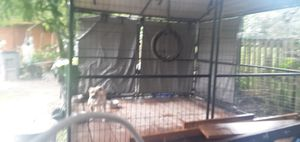 Dog kennel,,,cage for Sale in Wauchula, FL