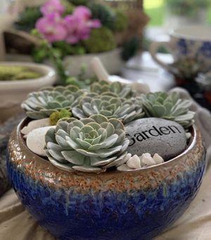 Vase redonda, suculentos naturales , piedras for Sale in Pembroke Pines, FL