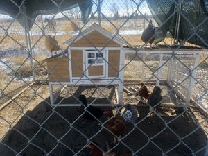 Chicken coop for Sale in Olathe, CO