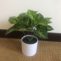 Fake Plant, Small for Sale in Oakland,  CA