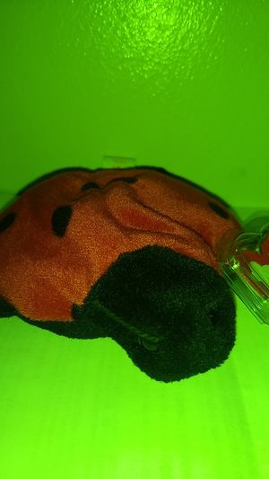 Lucky the ladybug beanie baby for Sale in Youngstown, OH