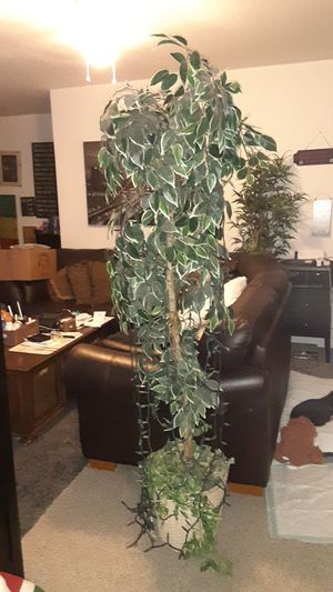 5.5 foot faux room tree excellent for Sale in Ocoee, FL