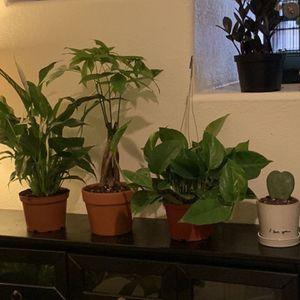 Indoor Plant Sale for Sale in Gilbert, AZ