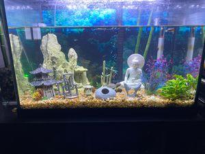 Established 20 gallon fish tank for Sale in Denver, CO