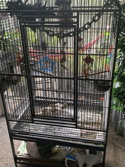 White Faced Cockatail Beautiful And Loving With Cage for Sale in Gainesville,  FL