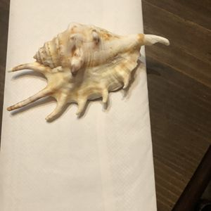Sea Shell for Sale in Baltimore, MD