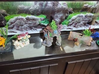 Fish Tank for Sale in Hollywood,  FL