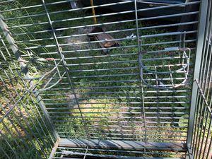 Large steel bird cage (58x40x30) for Sale in Cincinnati, OH