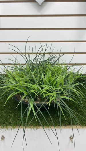 Decorative Plant for Sale in Hialeah, FL